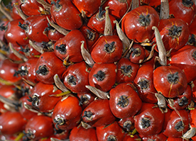 The Basics of Palm Oil