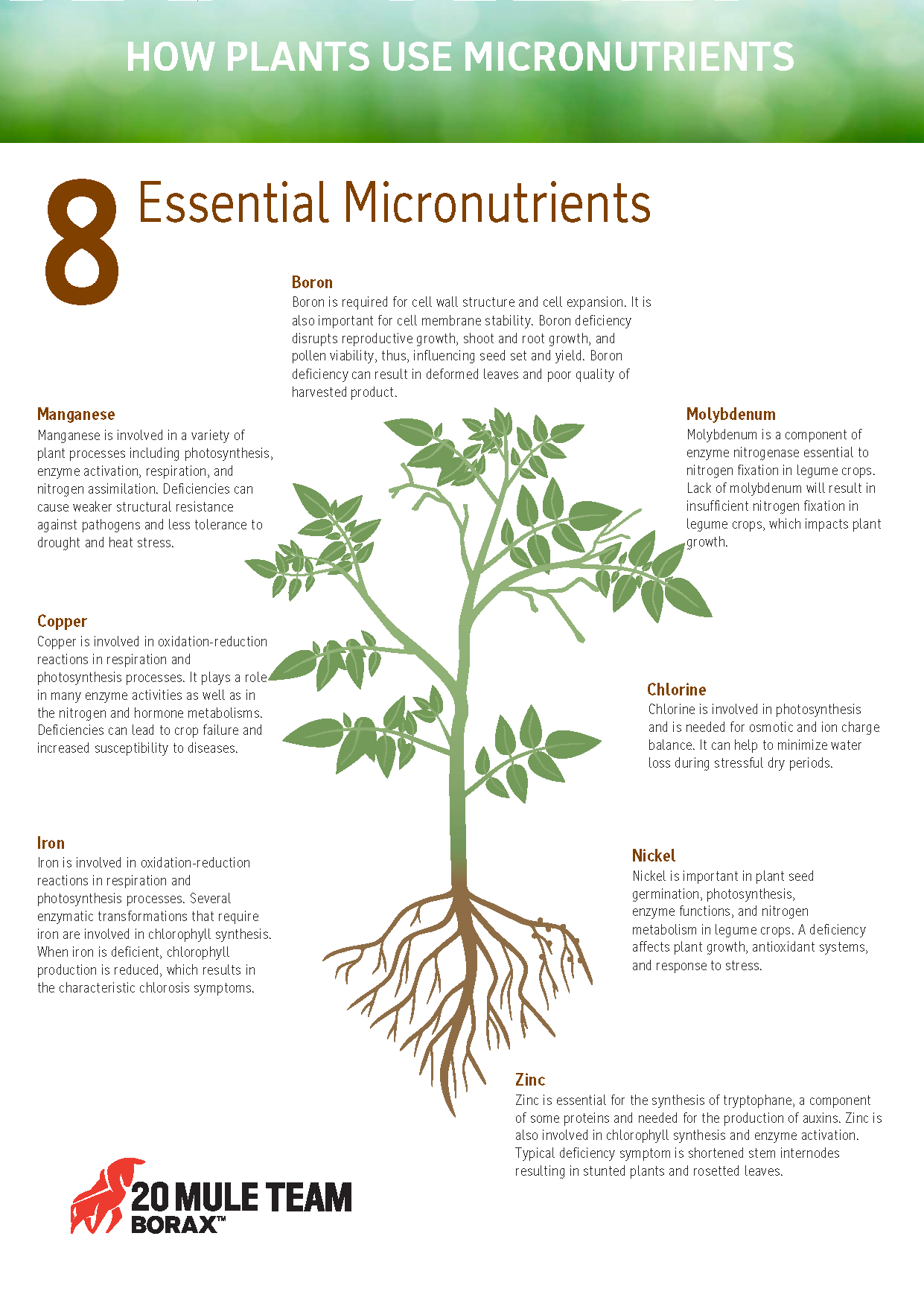 Eight essential micronutrients and how plants use them